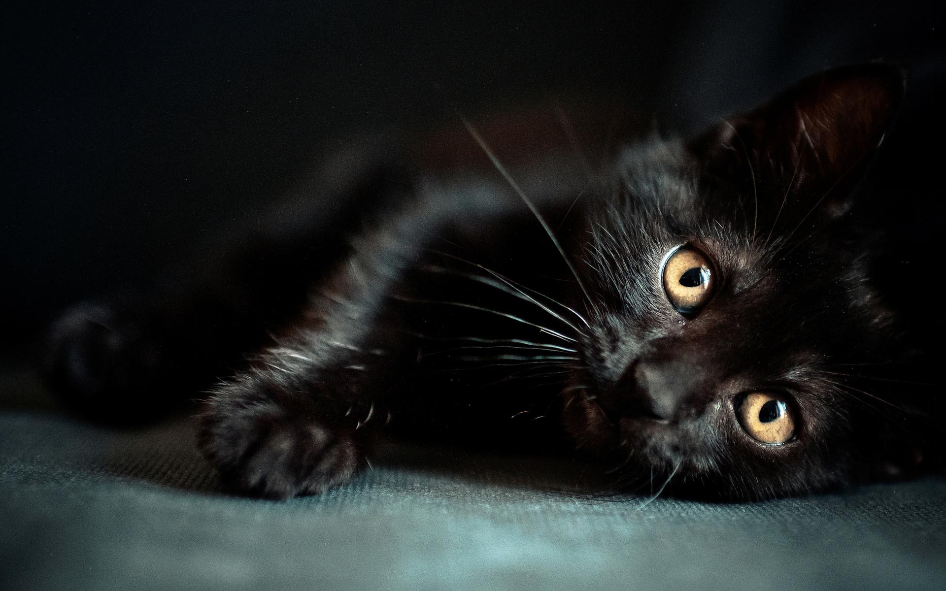 Wallpaper hd gatti nero
