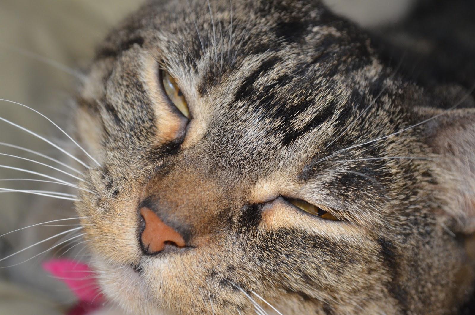 Cat blinking