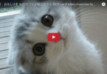 Gatti aprono porte con la maniglia