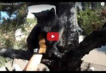 gattino su un albero salvato