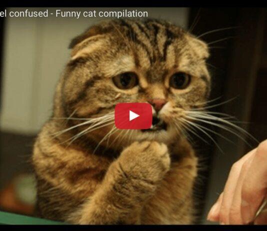 Gatti confusi