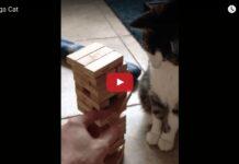 Gatto gioca a Jenga