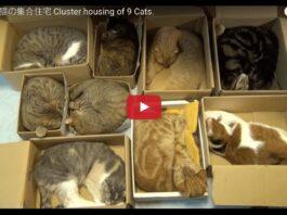Nove gatti dormono nelle scatole