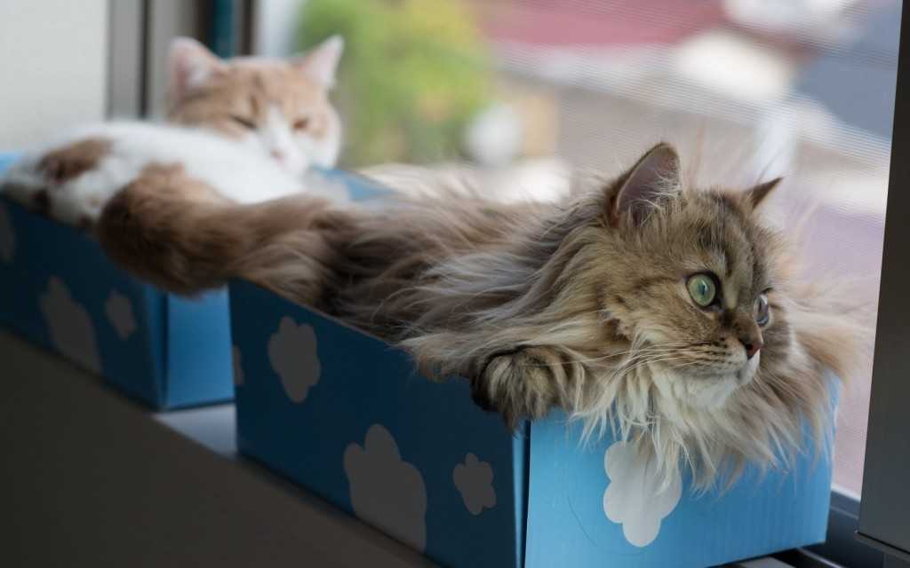 Window-Cats-Boxes