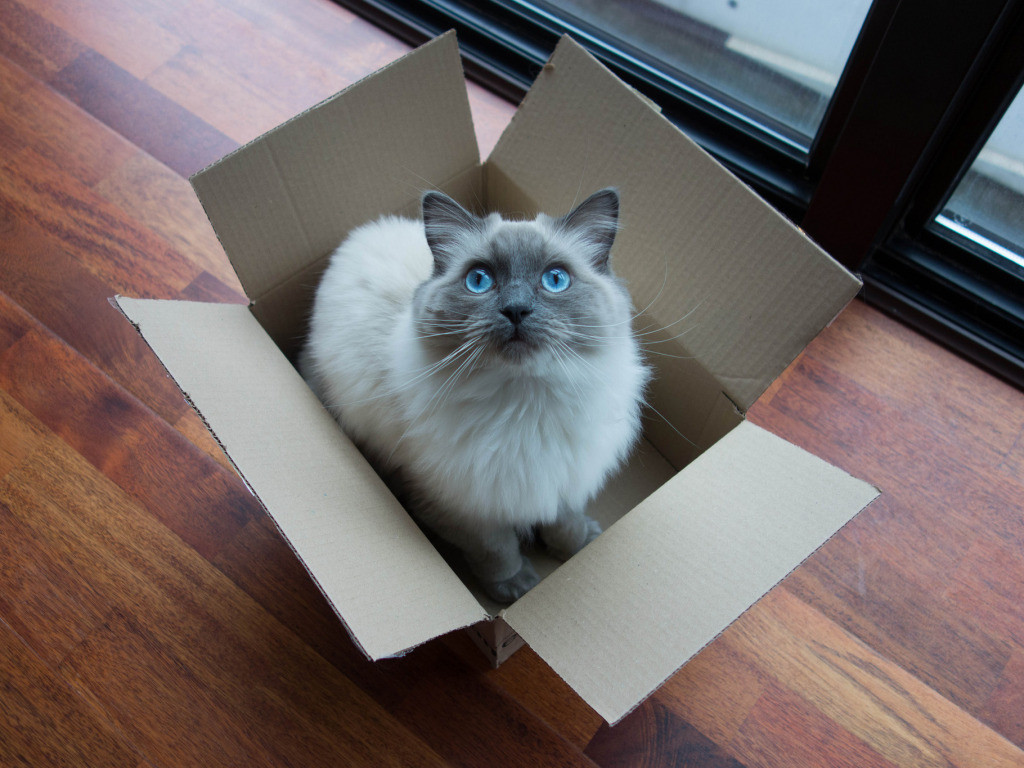 catinbox_paisley_by-kent-wang_4x3-1024x768