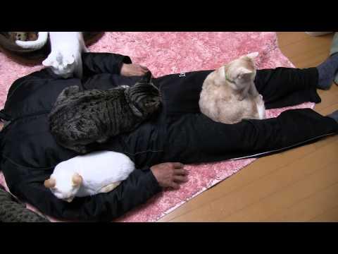 Gatti immobilizzano papà umano