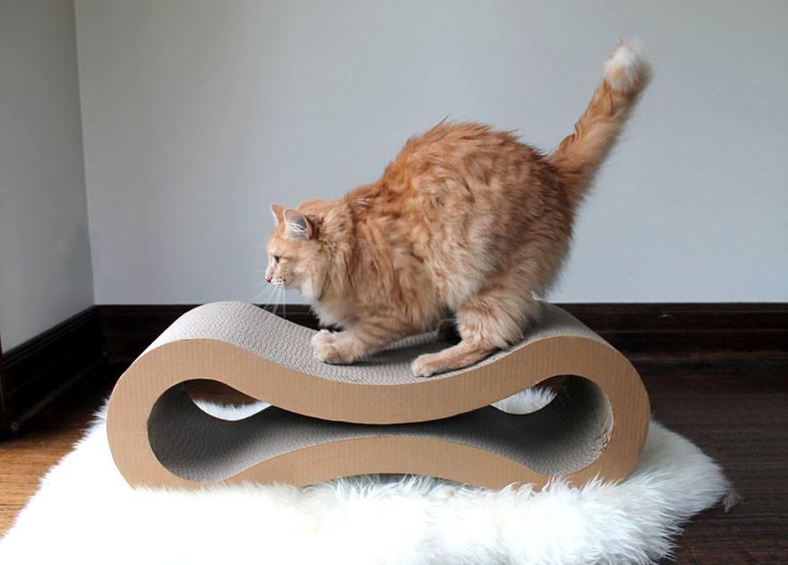 10 oggetti d 39 arredo a misura di gatto gattissimi for Oggetti d arredo particolari