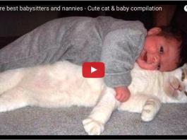 Gatto il miglior babysitter