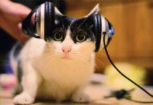 Rumori molesti? Il gatto non gradisce