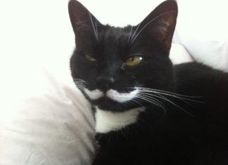 Vibrisse gatto