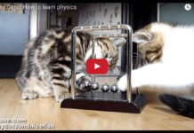 Tre gattini a lezione di fisica