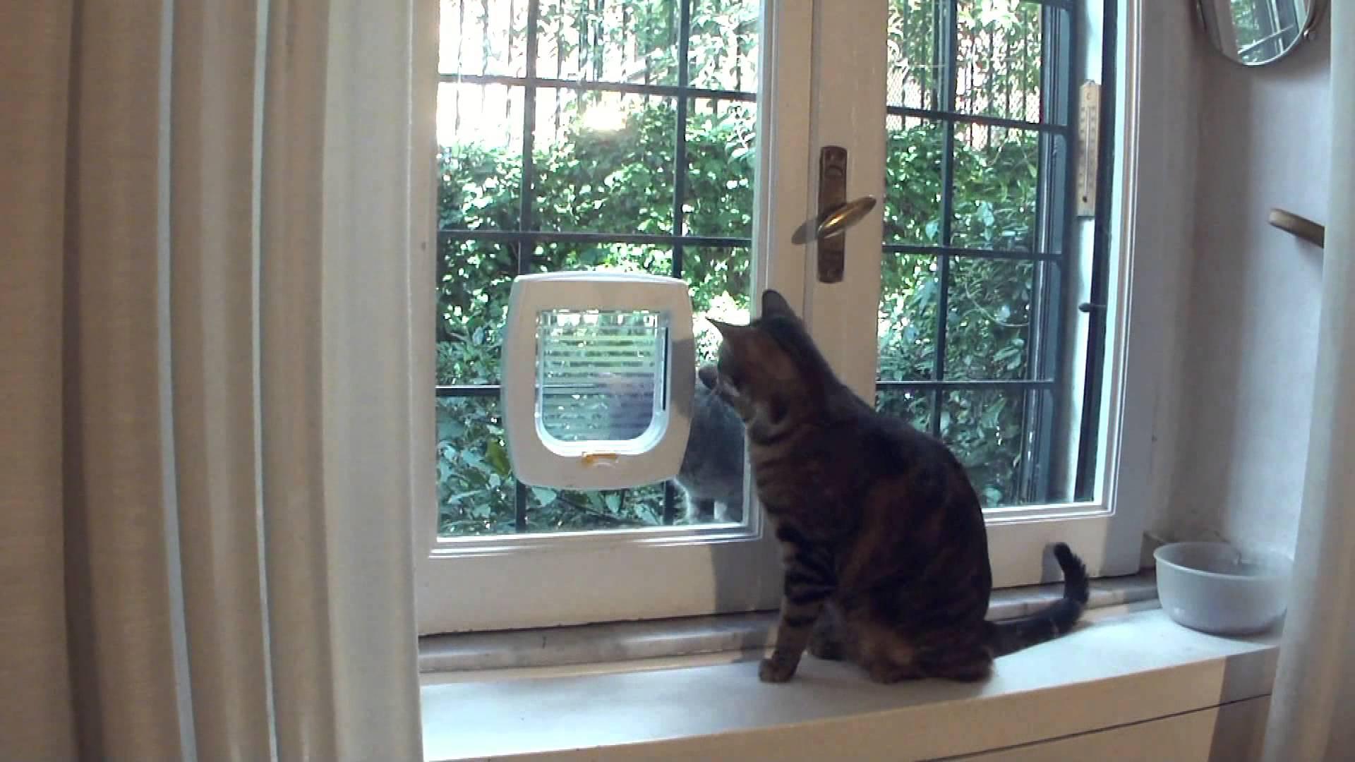La gattaiola semplice e con microchip gattissimi for Finestra gatto