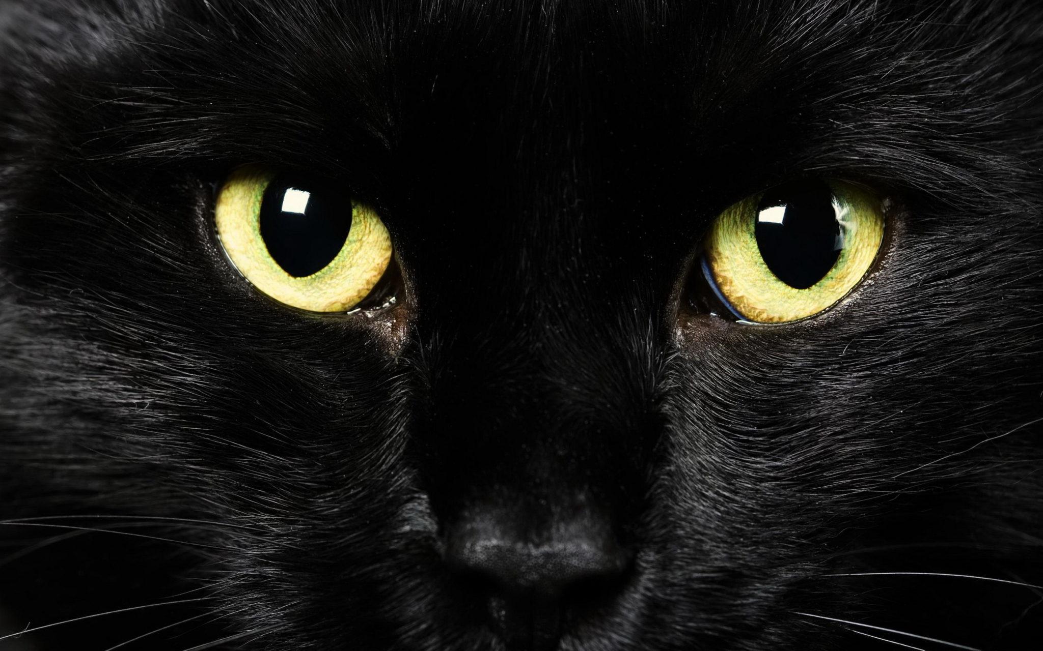 occhi del gatto