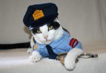Gatti mettono in fuga i ladri