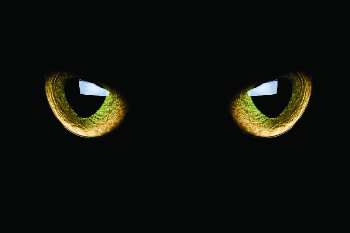 occhi di gatto catarifrangenti