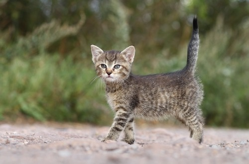 La postura del gatto i significati gattissimi for La coda del gatto