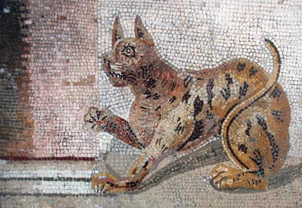 Mosaico gatto pompeiano