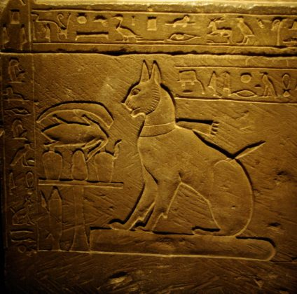 Gatto Principe Thutmoses