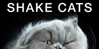 Shake Cats