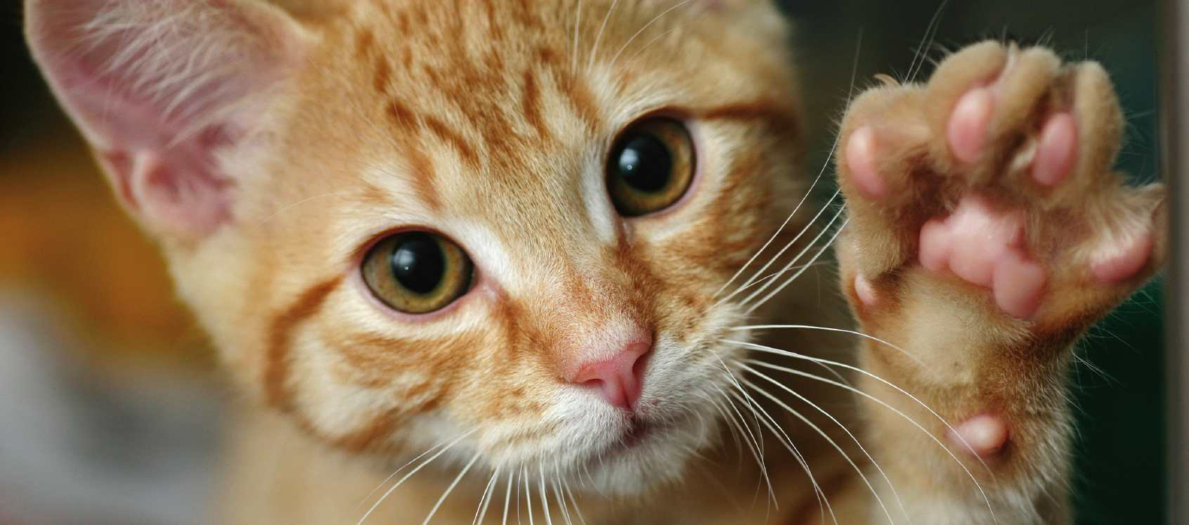 Il passo felpato del gatto - Gattissimi