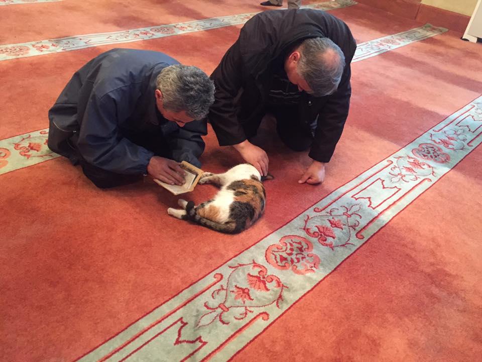 Gatti della moschea di Istanbul