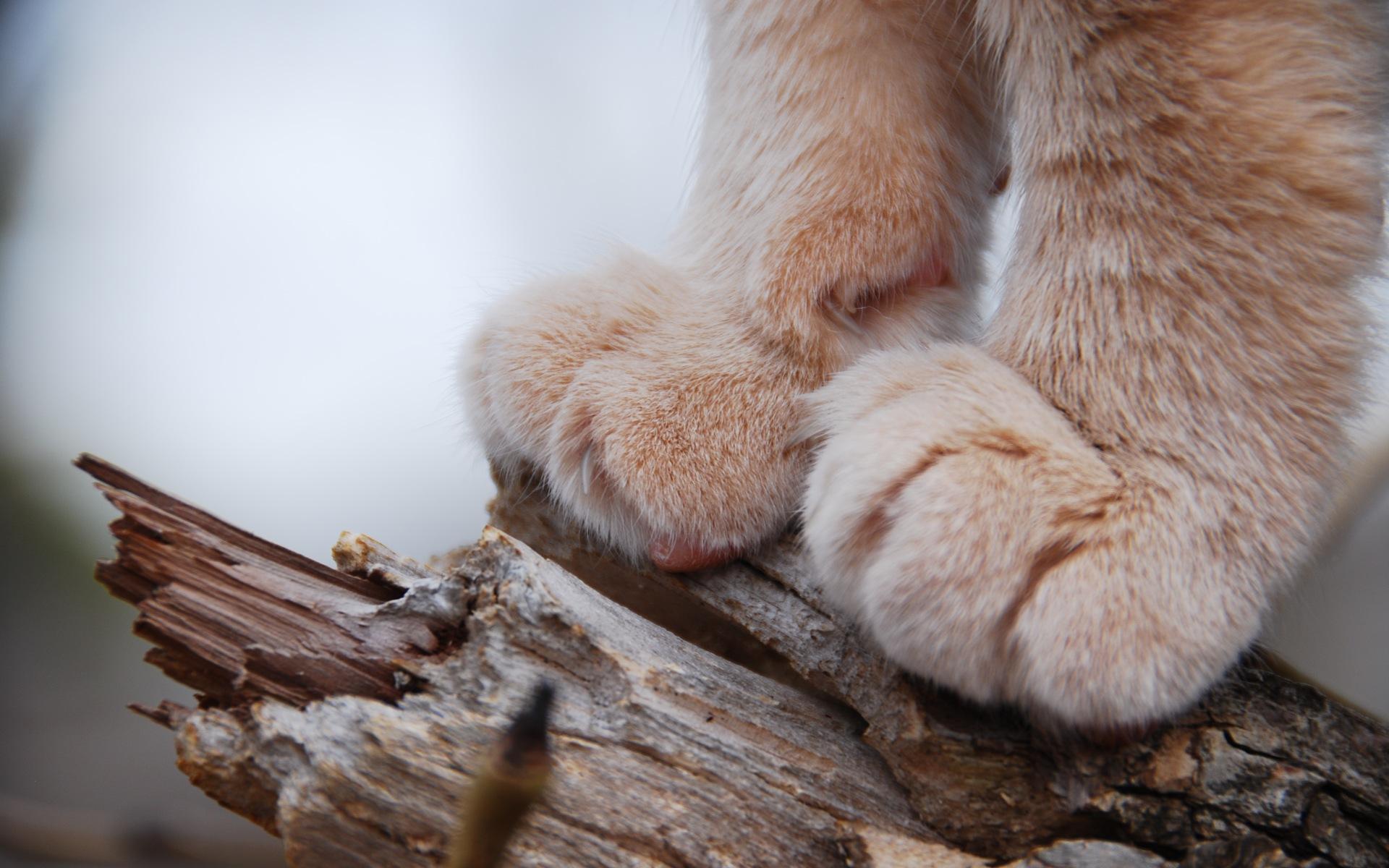 Cuscinetti gatto