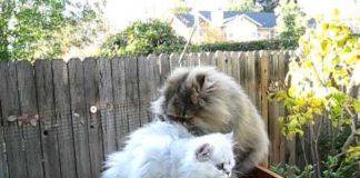 Gattissimi il fantastico mondo dei gatti - Piscina palline ikea ...