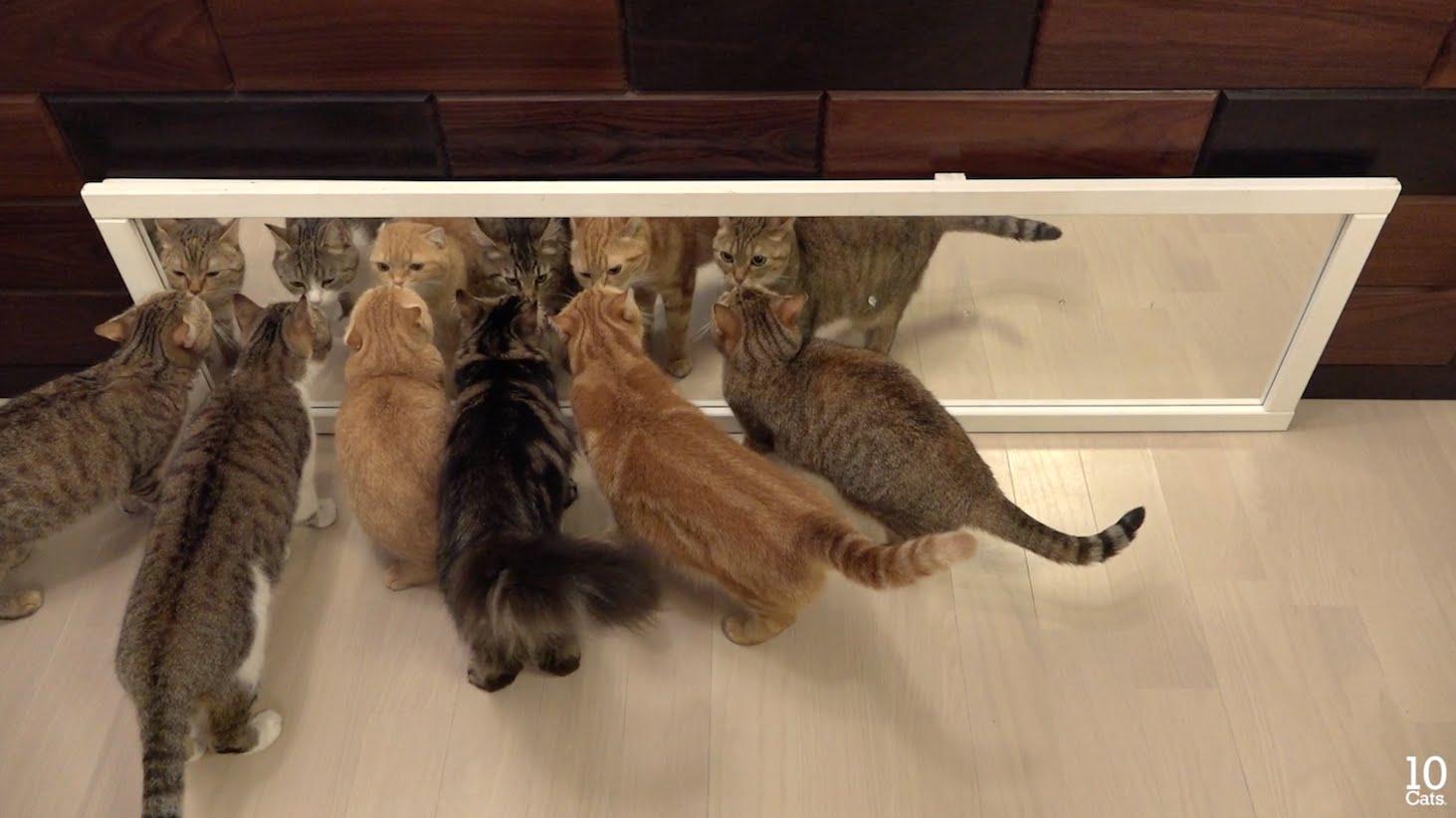 Gatti allo specchio gattissimi - Cane allo specchio ...