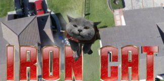 Aarons cat