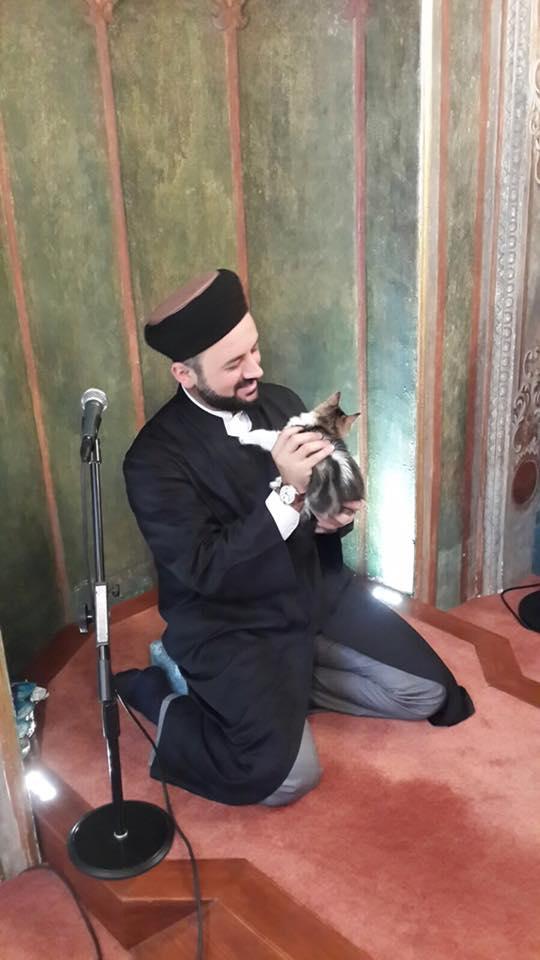 Gatti della moschea di Istanbul di Mustafa Efe