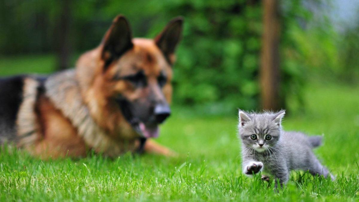 I piccoli gatti vivono più dei grossi cani