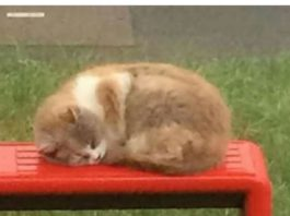 Missy, the Bus Stop cat