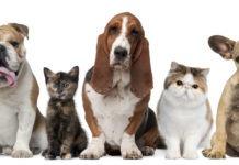 Cani e gatti