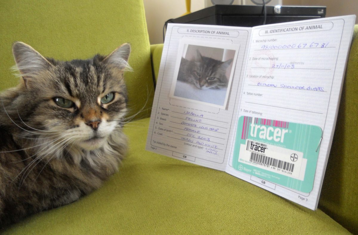 cat passport 3