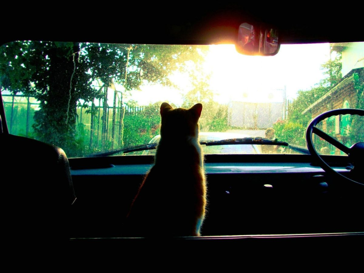 cat_car_glass_sunlight_40093_1600x1200