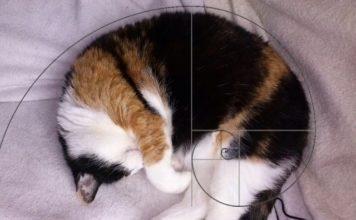 I gatti di Fibonacci