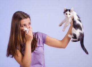 Allergia gatto