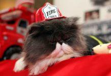 Pompieri di Miami salvano gattino