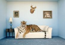 Una tigre in salotto