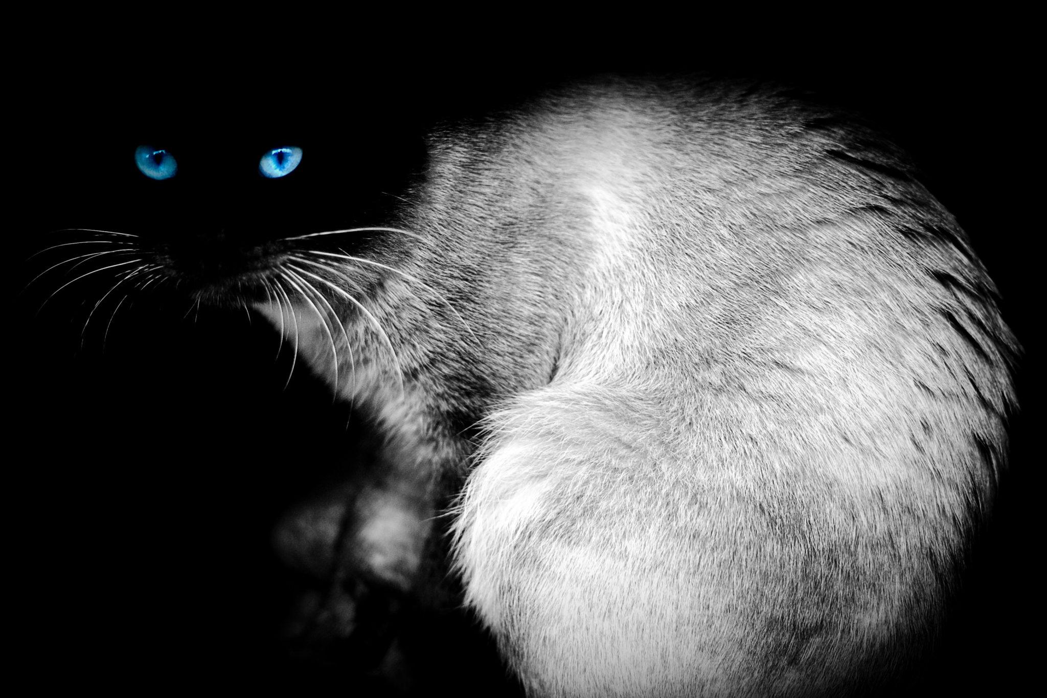 Gatto: animale misterioso