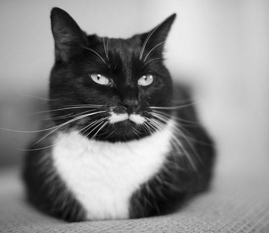 Gatti con i baffi