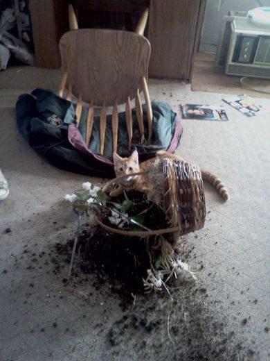 Le ho dato un pochino di fertilizzante
