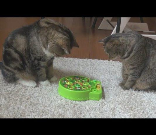Il gioco delle talpe per Maru e Hana