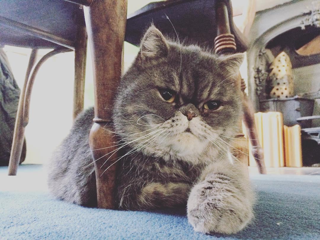 Luc the cat