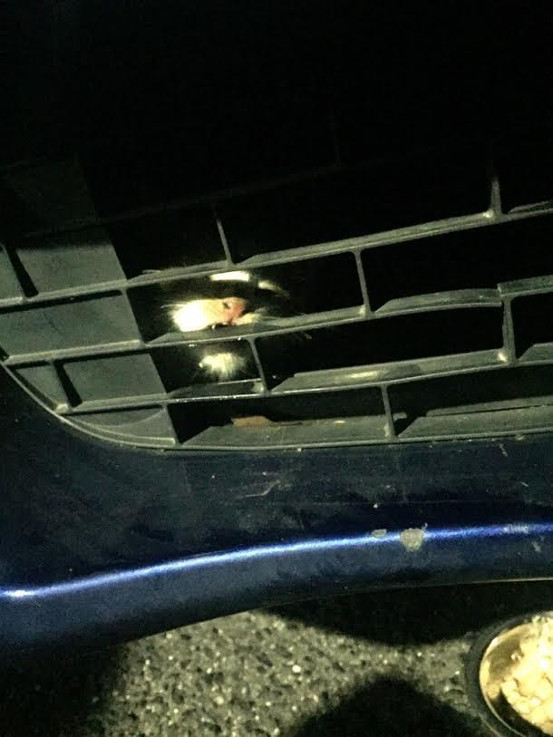 La piccola Honda intrappolata nel vano motore della vettura