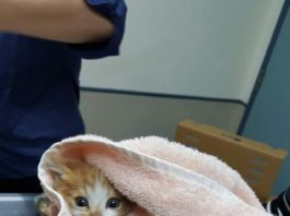 La gattina Honda salvata dai Vigili del Fuoco