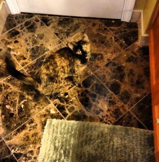 Il gatto - marmorizzato