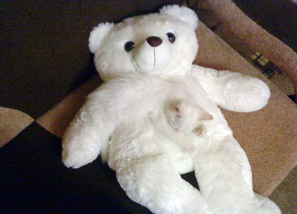 Il gatto - peluche