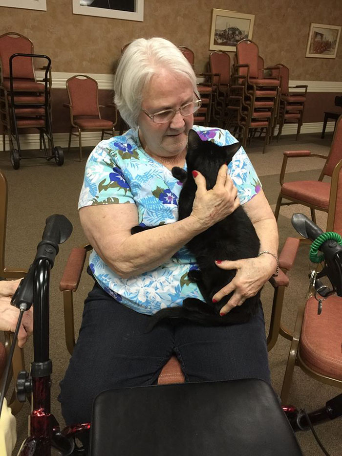 Gatti anziani del rifugio Alleycat fanno visita ai degenti delle case di riposo