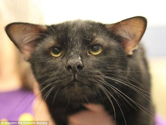 Batman, un gatto con quattro orecchie